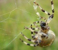 Ходильні ноги павука та гідравліка