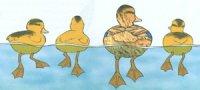 Функції перетинок на ногах водоплавних птахів