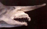 Акула-гоблін гідна своєї назви