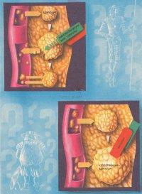 «Хитра» і «скупа» жирова тканина