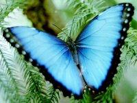Таємниці блиску метеликів (біологічні об'єкти з фізичними явищами)