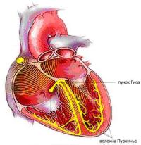 Вчені у серці людини
