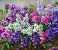 Квіти приємного аромату - бузок