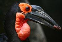 Оригінальність пташиного черепа