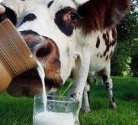 Молоко: кому, скільки і навіщо?