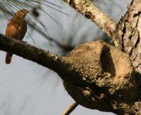Гончарна справа у птахів