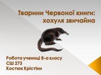 Презентація «Тварини Червоної книги: хохуля звичайна»