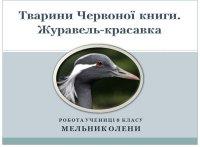 Презентація «Журавель-красавка»
