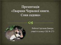 Презентація «Тварини Червоної книги. Соня садова»