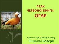 Презентація «Птах Червоної книги. Огар»