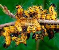 Жовтий колір у житті тварин
