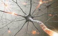Нейрон – провідник в тілі