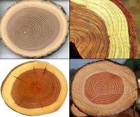 Різноманітність властивостей деревини