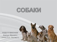 Презентація «Собаки»