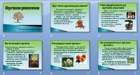 Презентація «Органи рослини»
