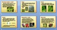 Презентація «Надземна частина рослин»
