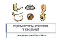 Презентація «Рудименти та атавізми в еволюції»