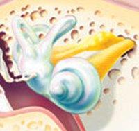 Внутрішнє вухо: два в одному