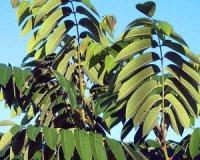 """Розробки уроків з біології 6 кл. до теми """"Рослини"""" (6-10 уроки)"""