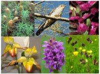 Зозуля у назвах рослин