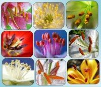 Про що говорять тичинки квіток