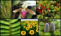 """Розробки уроків з біології 6 класу до теми """"Різноманітність рослин""""  (1-4 уроки)"""