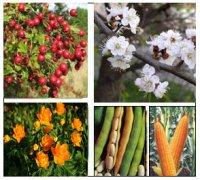 """Розробки уроків з біології 6 класу до теми """"Різноманітність рослин"""" (5-12 уроки)"""