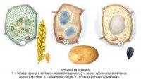Особливі значення клітинних включень