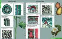 Міцність і пружність механічної тканини