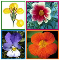 Різнобічні характеристики квіток