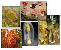 Секреція у функціональній діяльності рослин