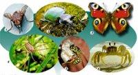 """Розробки уроків до теми 1 """"Різноманітність тварин"""" 7 кл. 6-10 уроки (нова програма)"""