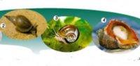 """Розробки уроків до теми 1 """"Різноманітність тварин"""" 7 кл. 11-15 уроки (нова програма)"""