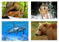 """Розробки уроків до теми 1 """"Різноманітність тварин"""" 7 кл. 16-24 уроки (нова програма)"""
