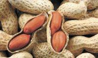 Плоди арахісу: чи дійсно вони горіхи?