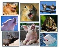 Про що «говорять» тварини?