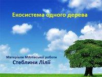 Презентація «Екосистема одного дерева»