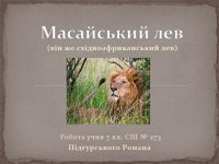 Презентація «Масайський лев»