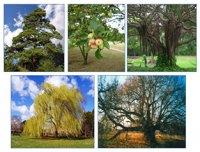 Дерево – диво природи