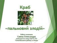 Презентація «Краб «пальмовий злодій»»