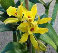 Орхідні прянощі: історія ванілі