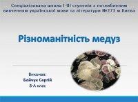 Презентація «Різноманітність медуз»