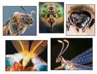 Сенсорика у комах