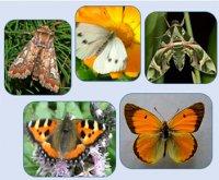 Рослинні назви метеликів