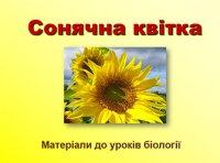 Презентація «Сонячна квітка»