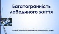 Презентація «Багатогранність лебединого життя»